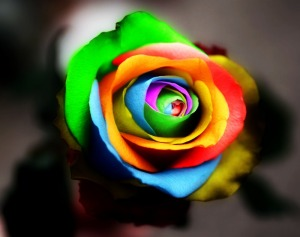 rainbow_rose_by_keytan-d55ralx